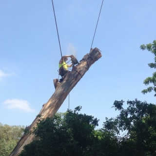 Removal of dangerous tree
