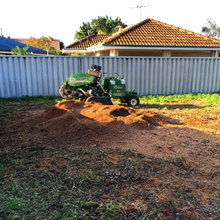Stump grinding - Bentley