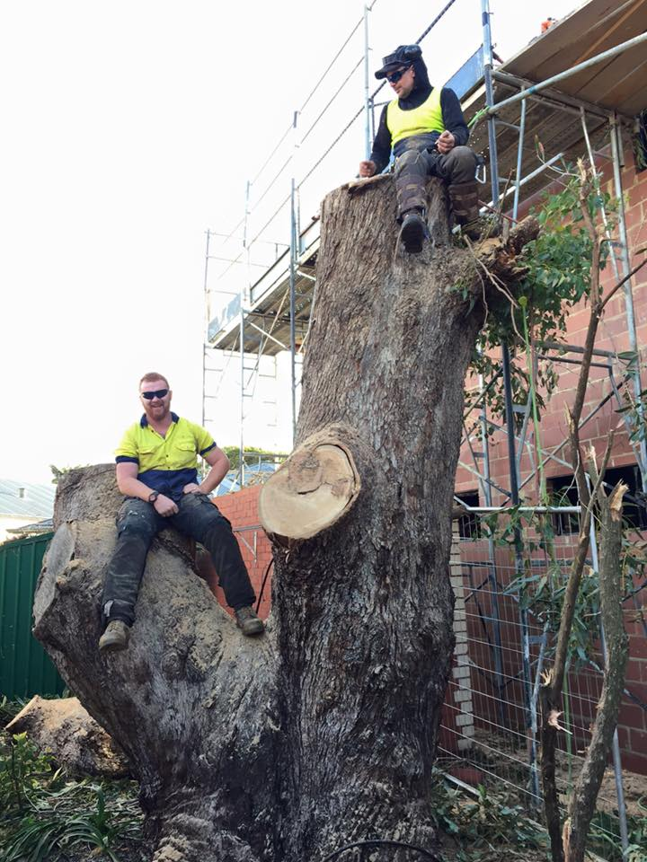 tree trimming in perth