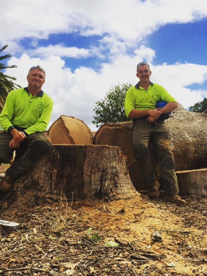 Perth Arbor Services felled tree in Perth