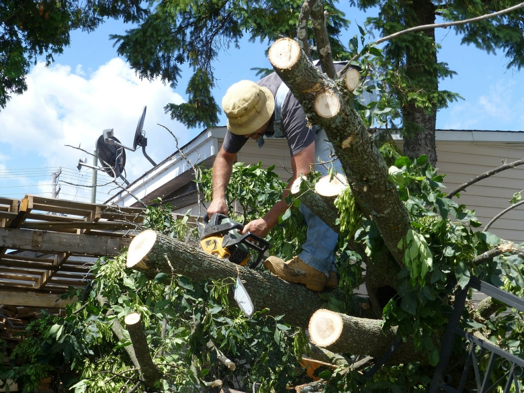 Tree lopping and tree pruning by a professional arborist can save your tree