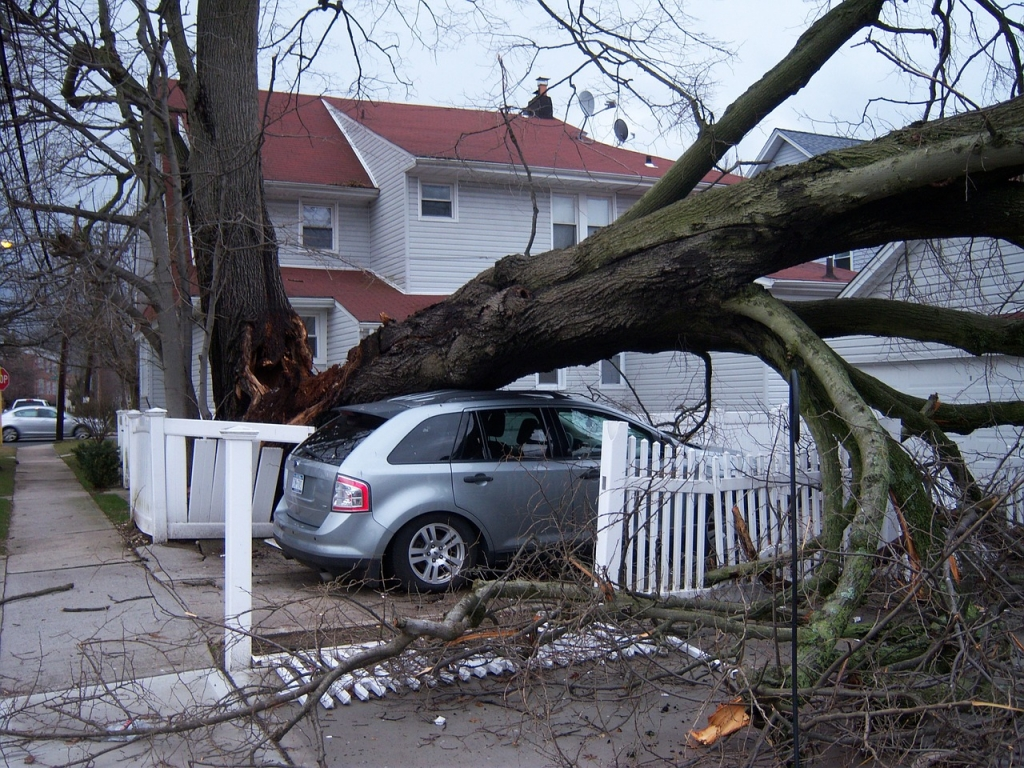A fallen tree blocks the front yard of a house