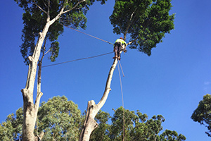 tree risk assessment services